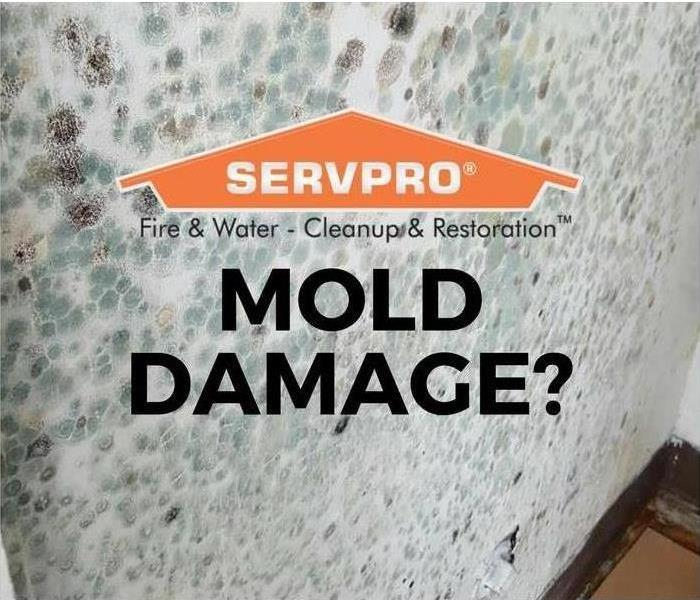 SERVPRO's got the Mold Under Control.